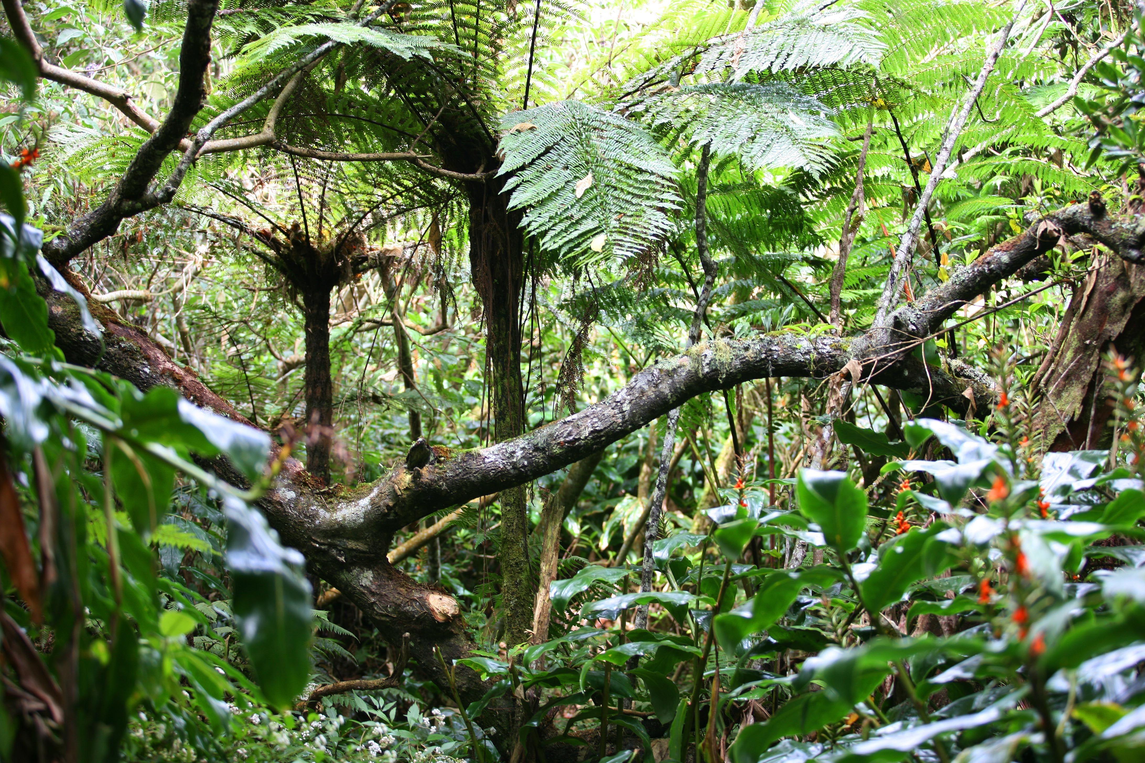 Zarlor flânerie l'appel de la forêt