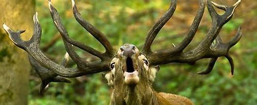 Jagd Lunch