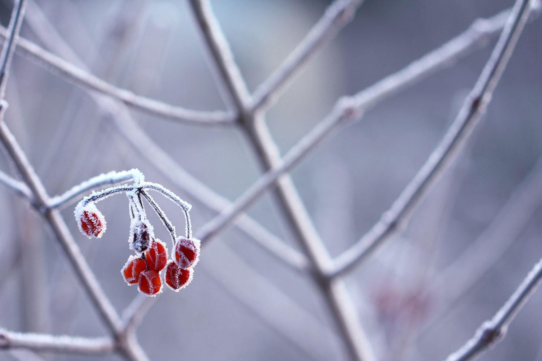 White Christmas - en riktig julkonsert