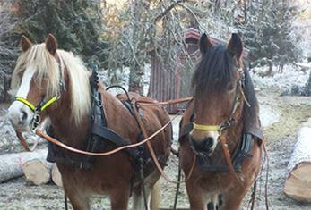 Kvällstur med häst på Sollerön