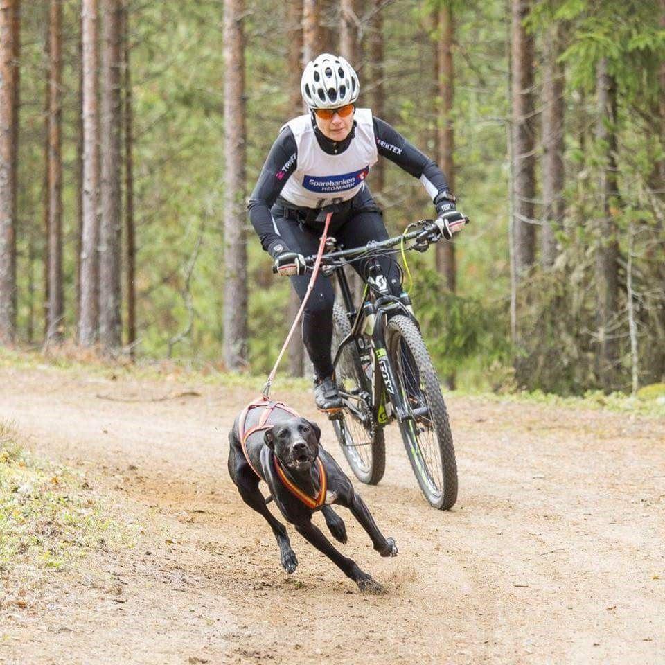 En av klasserna är cykel med en hund.