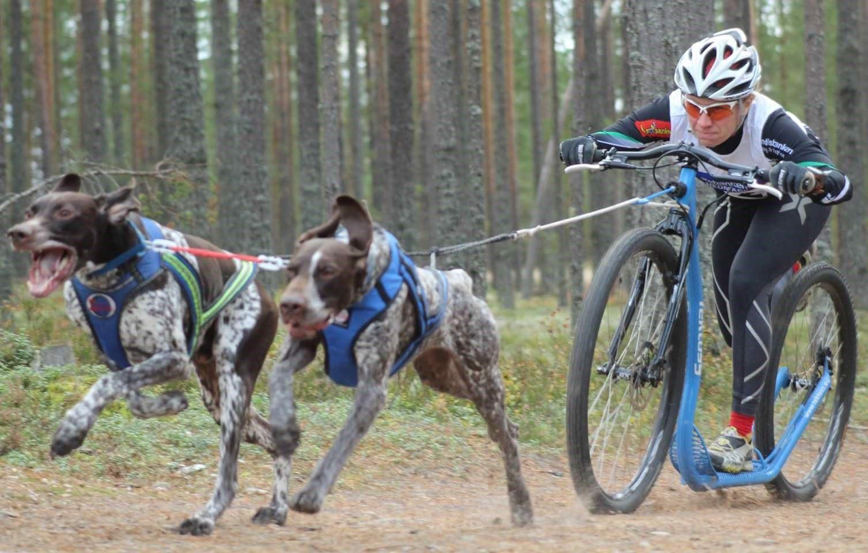 En annan är kickbike med två hundar.