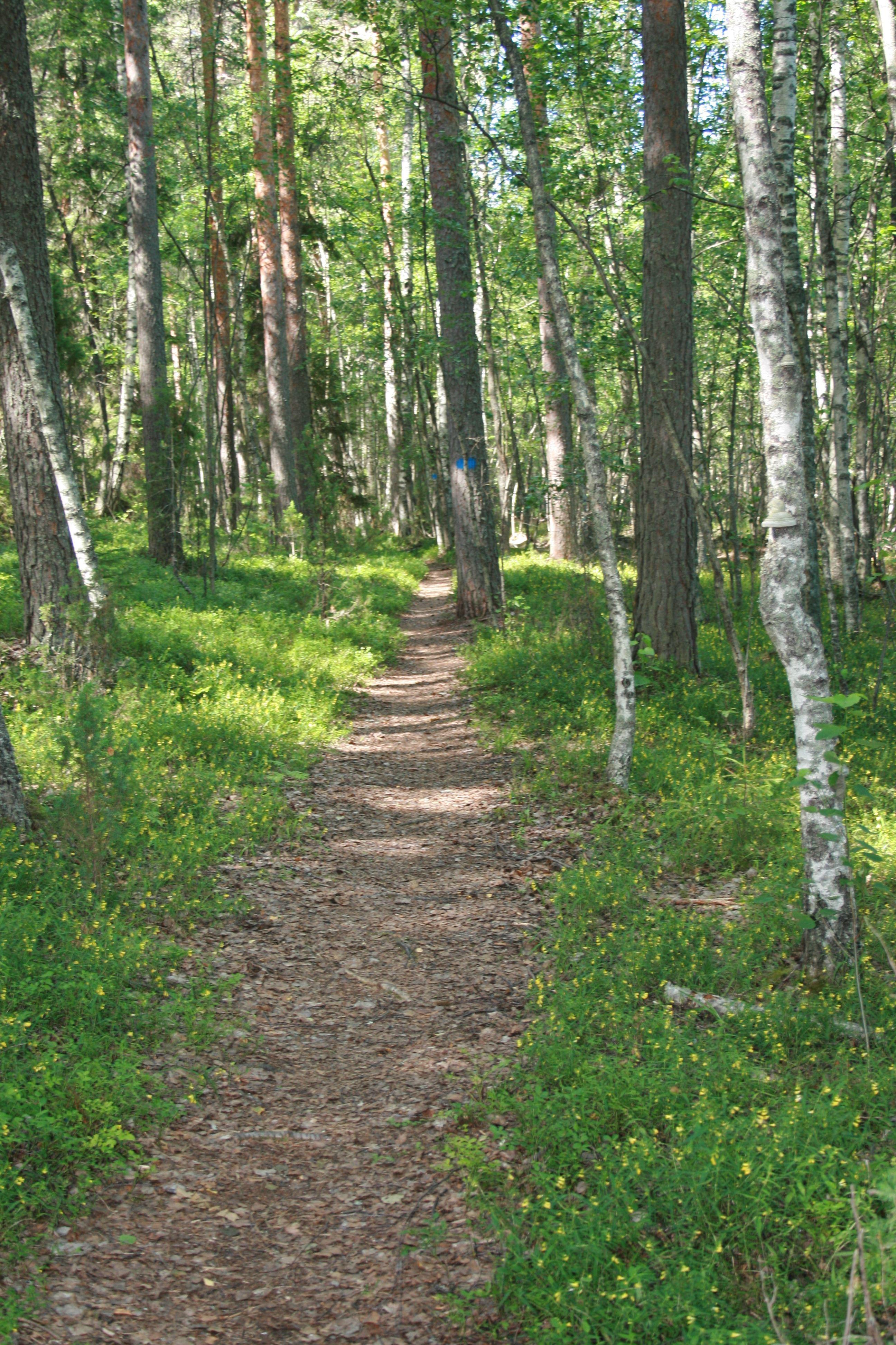 Explore Päijänne National Park | Kiuasniemi Marina