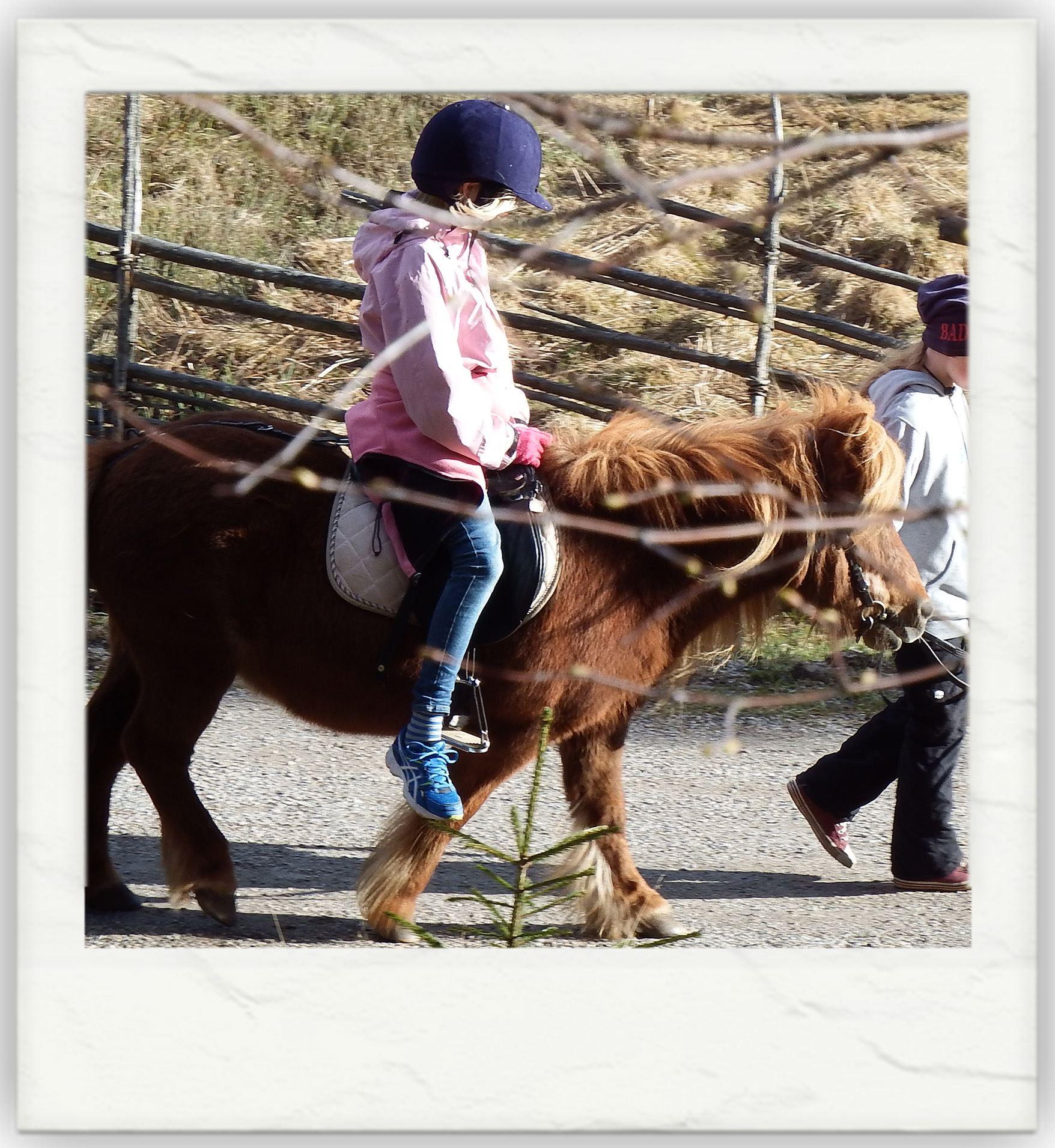 Ponnyridning - Höstlov på Norra Berget