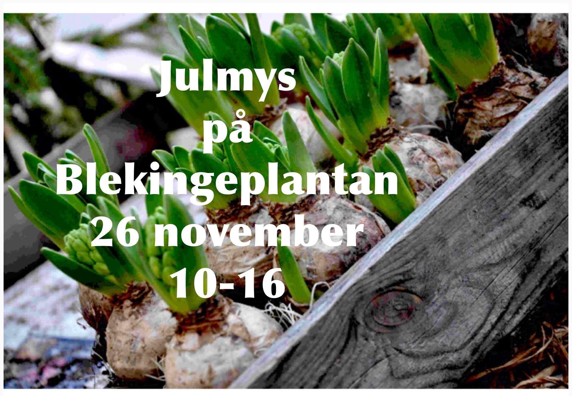 Christmas at Blekinge Plantan