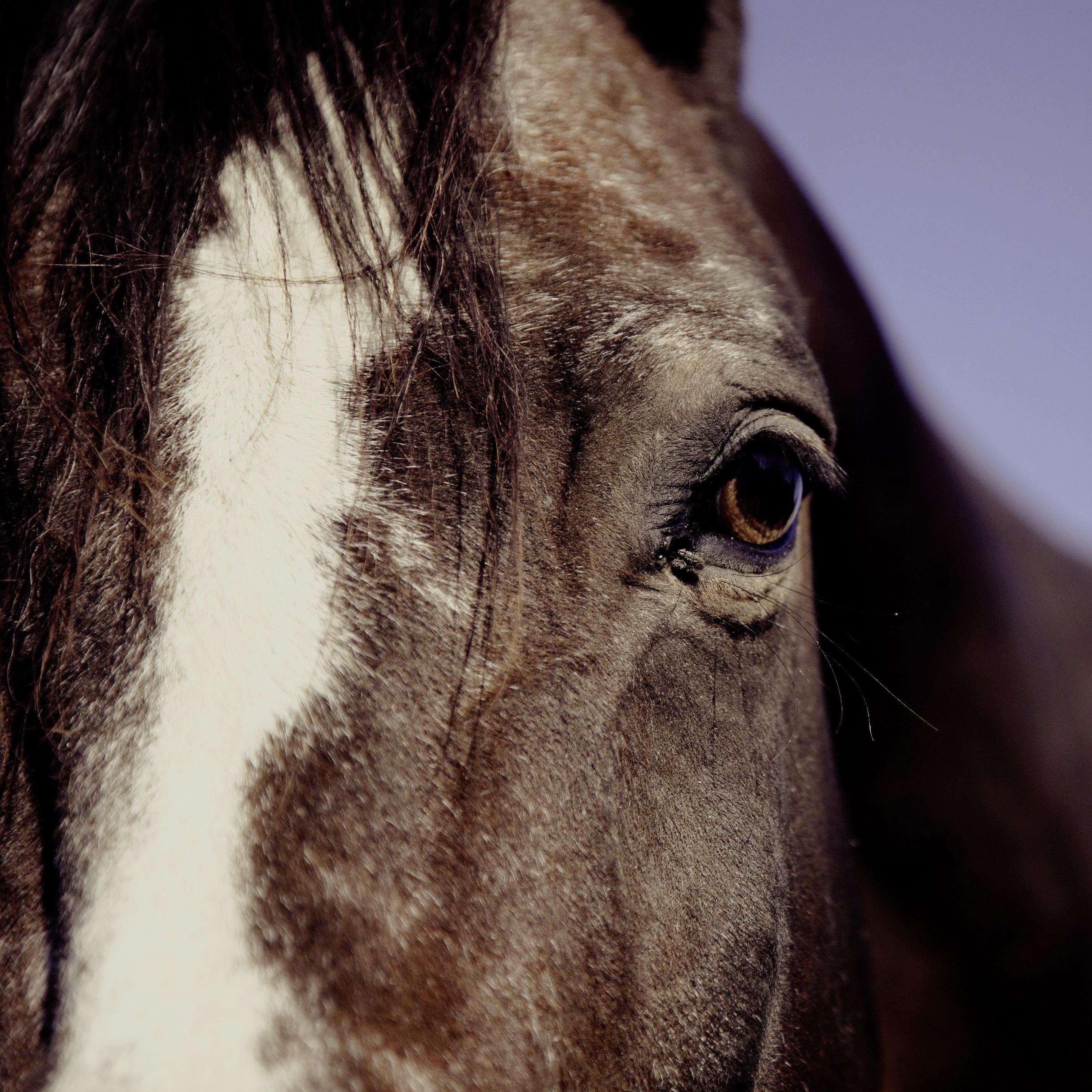 Hästar, avel och ridsport