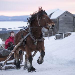 Häst och släde och Orsasjön. Vinterlandskap.