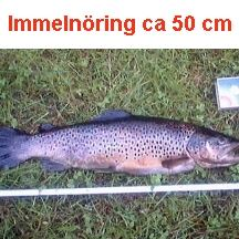 Immeln, fiske