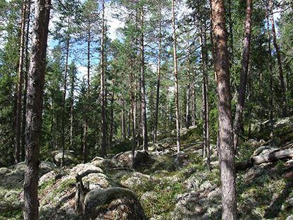 Helena Persson,  © Länsstyrelsen Gävleborg, Naturreservat Kransarna, Bergsjö