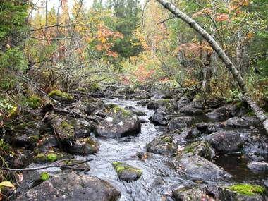 Länsstyrelsen Gävleborg,  © Länsstyrelsen Gävleborg, Bodsjöån, naturreservat, Hassela