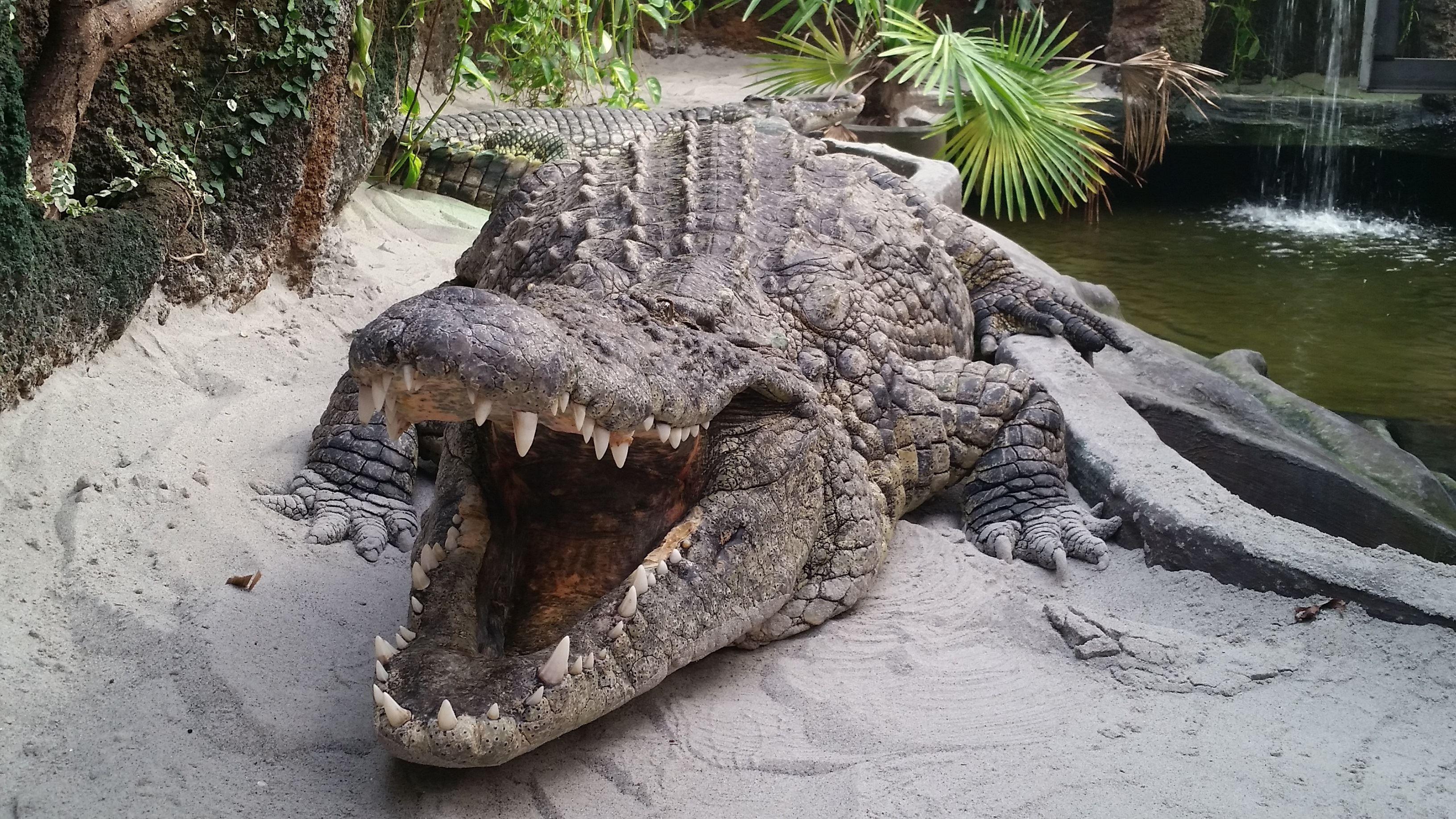 Krokodille Zoo i efterårsferien - NatZoo vender tilbage