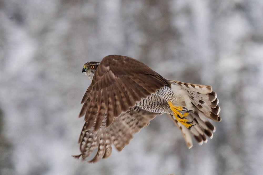Eye to eye with a wild eagle!