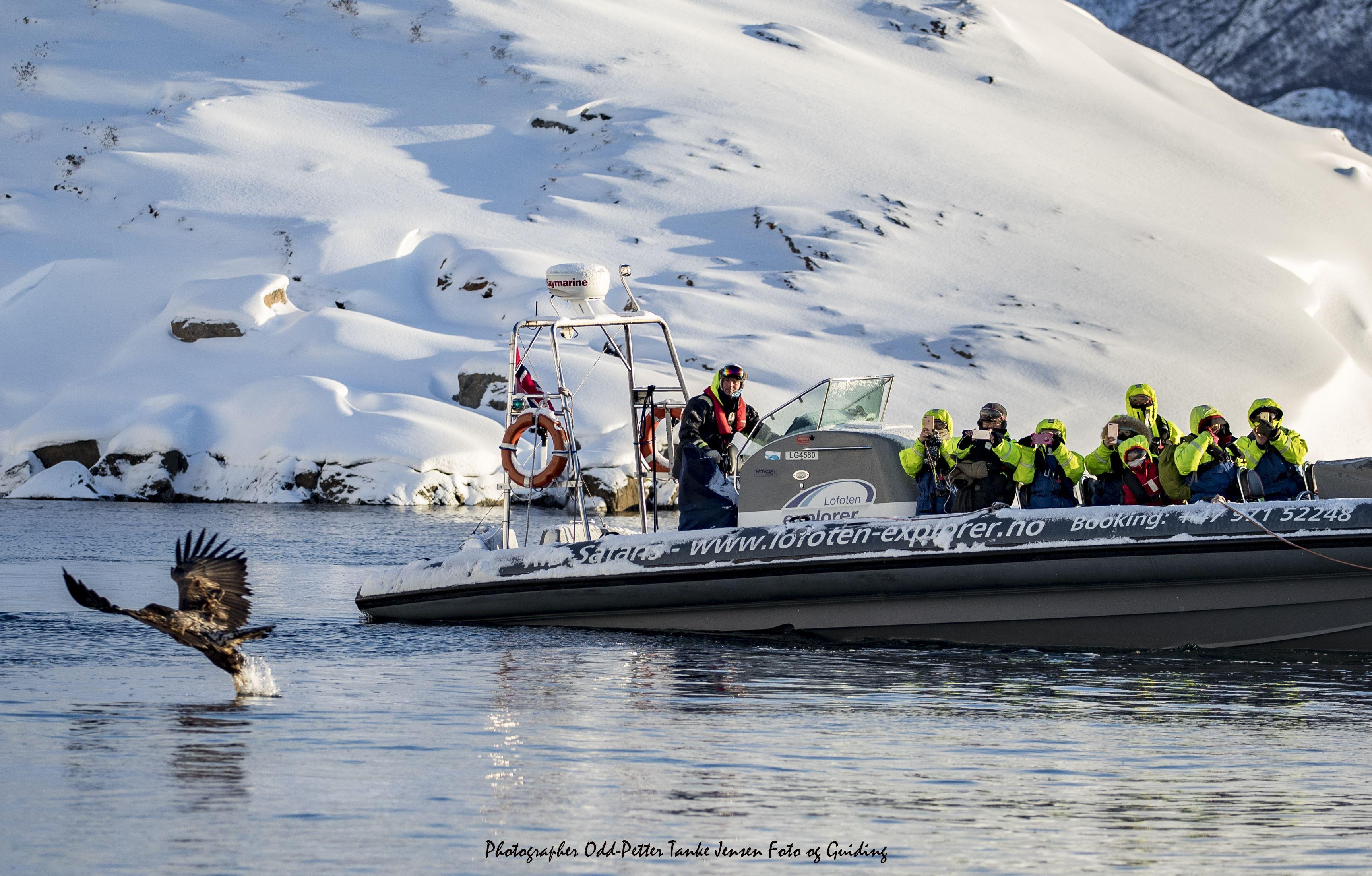 Explore Trolllfjord & Sea Eagle RIB Safari