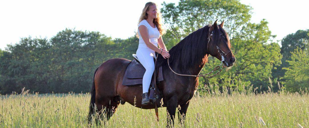 Conquista Gård, Paso Peruano som är en helt unik större töltande häst som härstammar från Peru