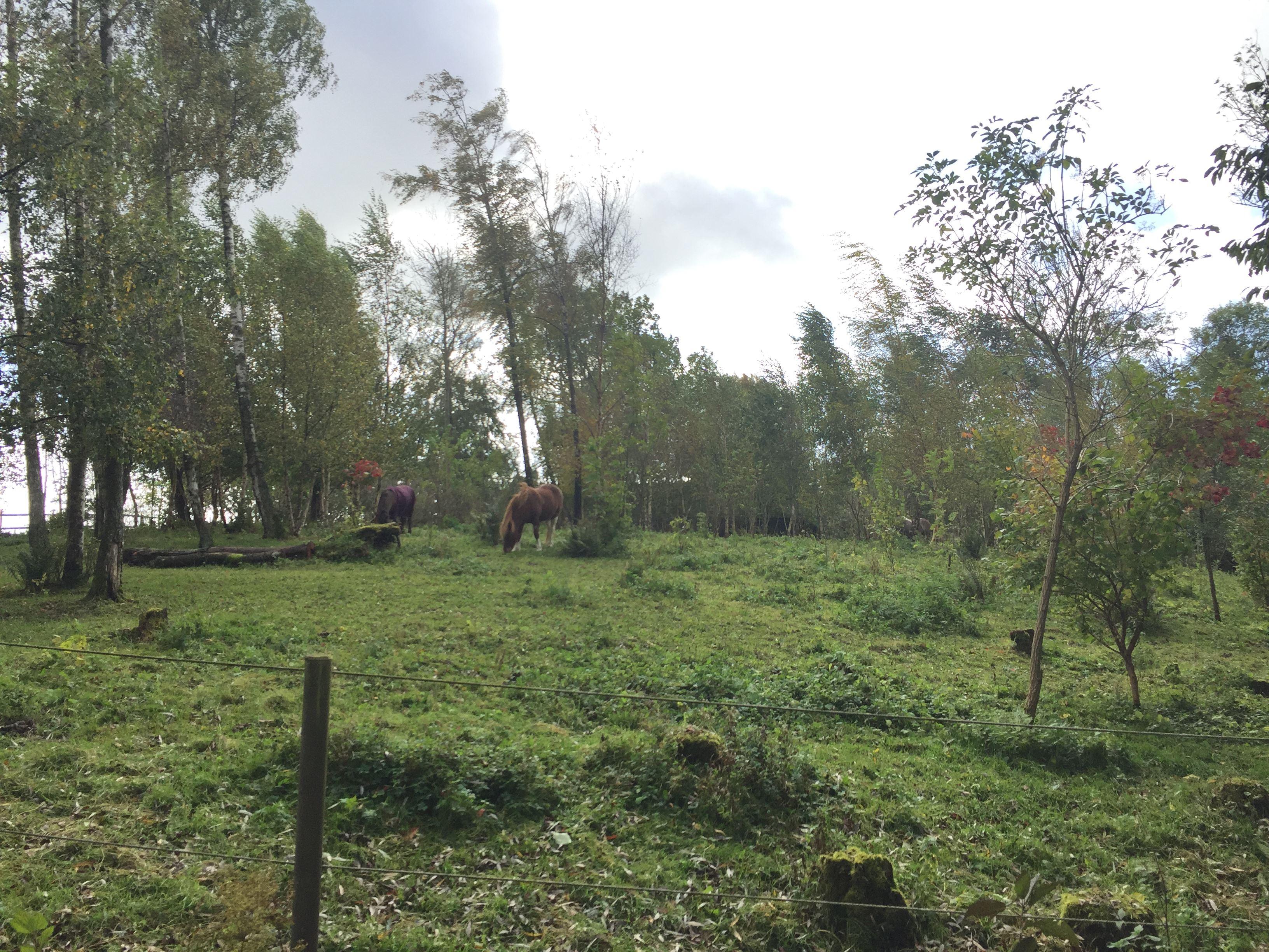 Henriette Ellberg, Paso Peruano på höstbete mittemot gården