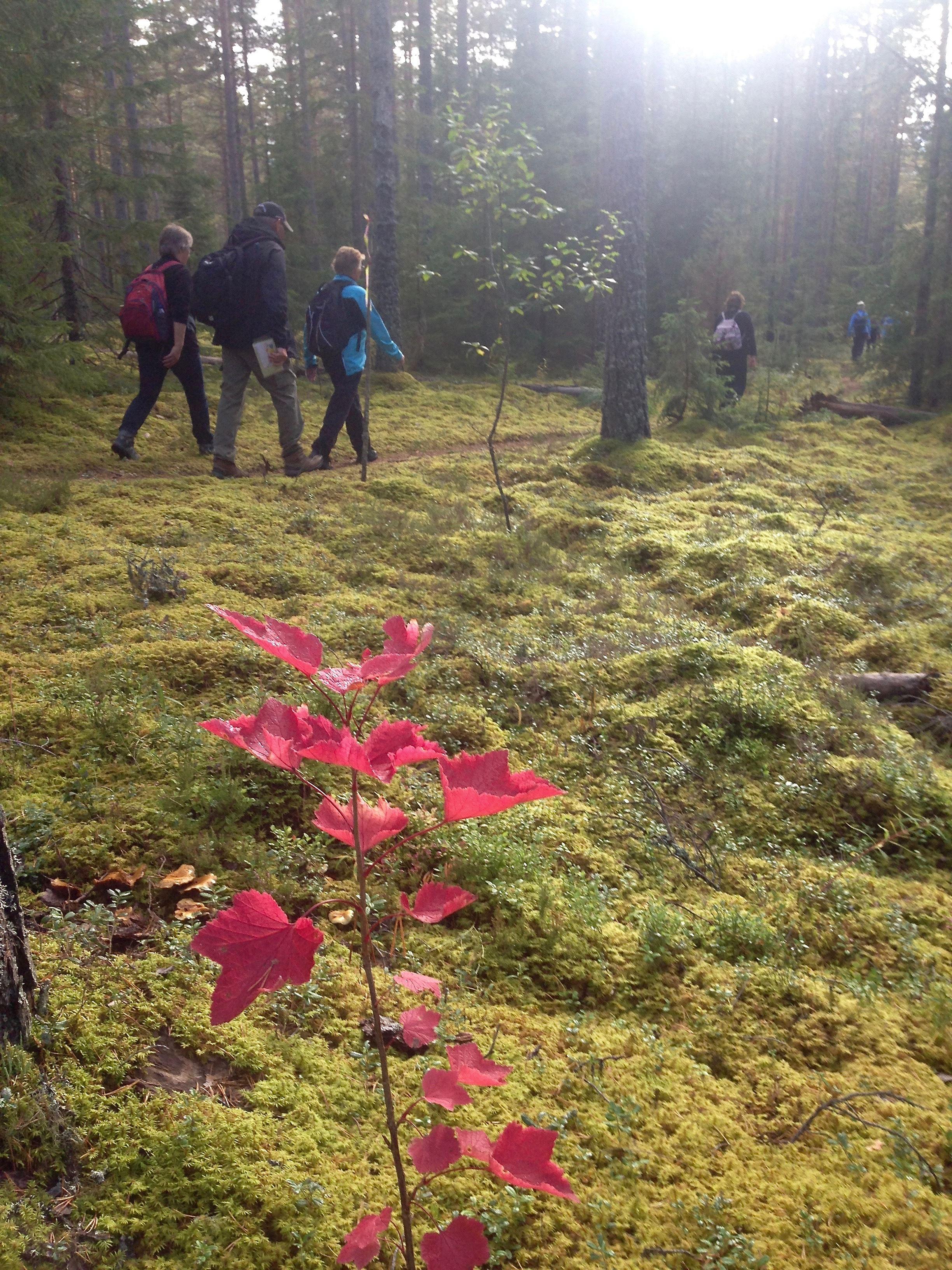 Bergsbestigning junior i Tällberg