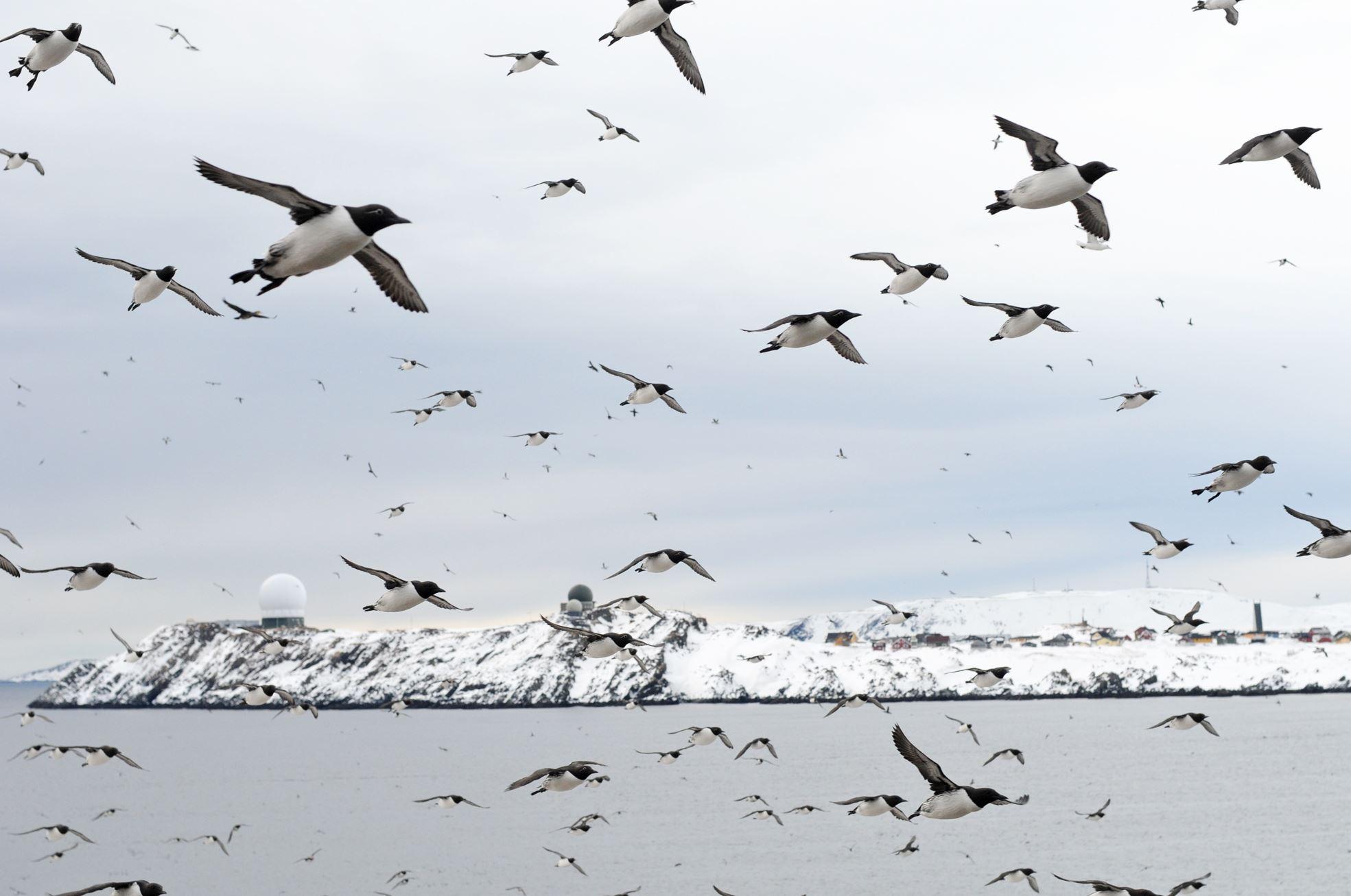 Båttur til Hornøya