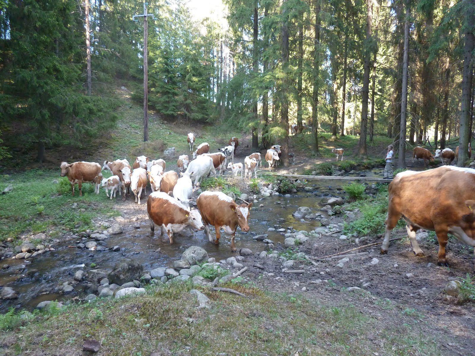 The Tupala farm