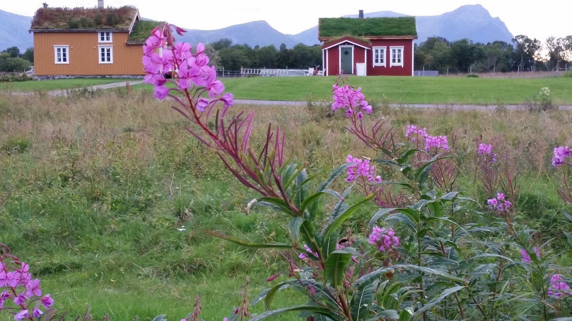 Loviktunet,  © Loviktunet, Det Røde Hus, Lovik, Andøy,Vesterålen