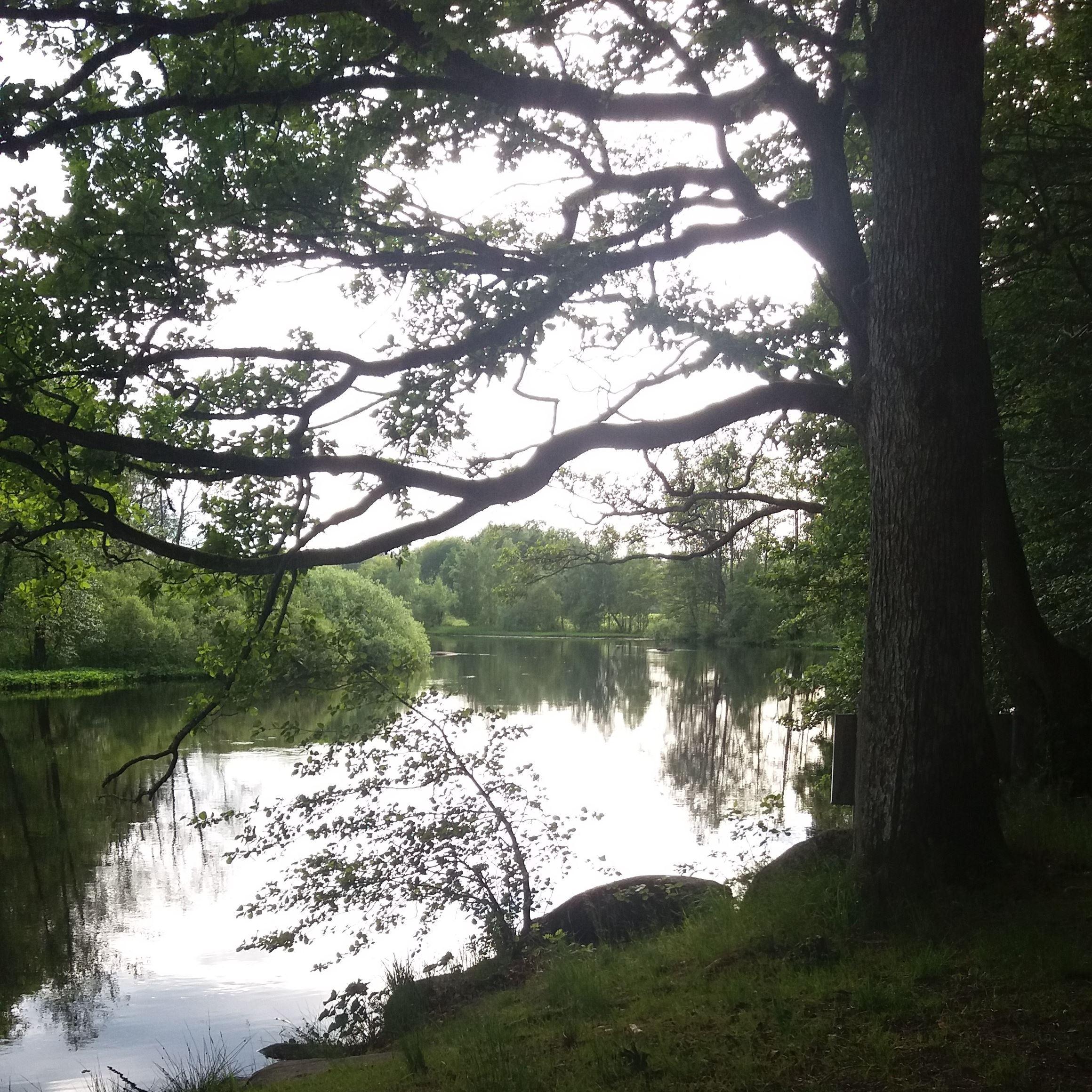 Paddeltur 3: Helge å, Hovgården/Skeingesjön - Osbysjön (13-15 km)