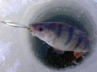 Winter Fishing in Päijänne National Park | Kiuasniemi Marina