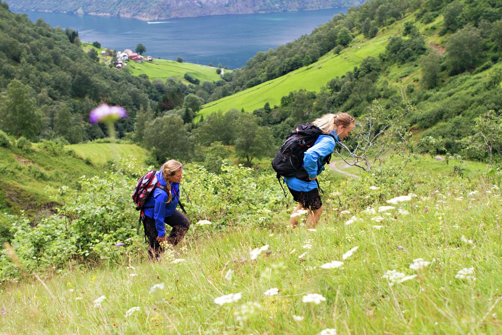 Basic FjordSafari & Hike to a goat farm