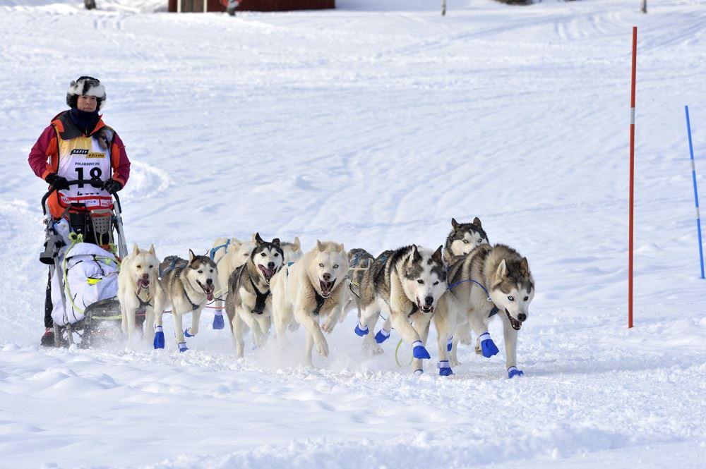 Nisse Schimdt, Polardistance