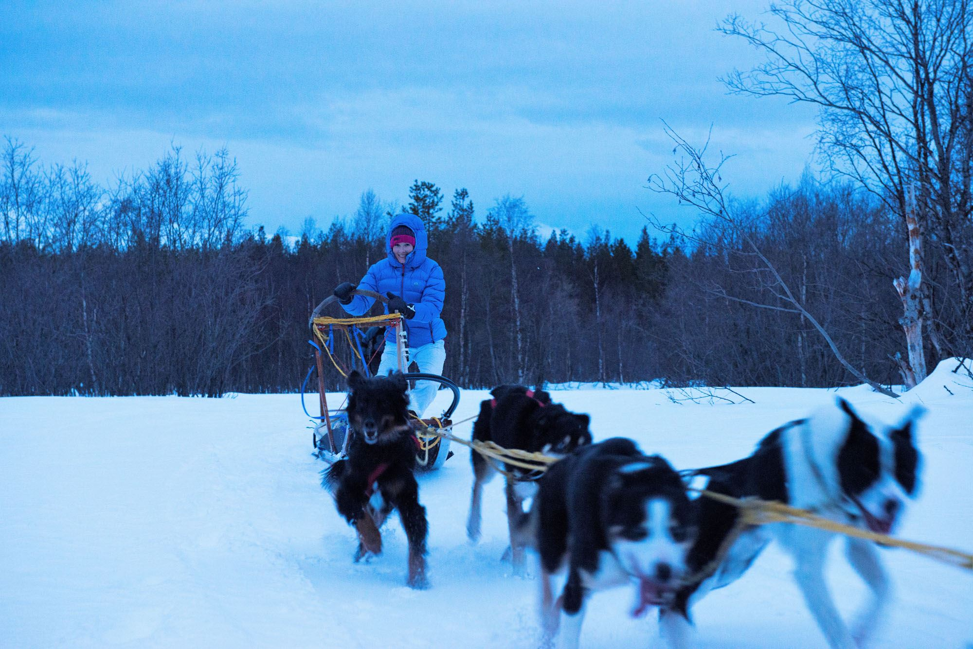 © Mira Hampel, Dog sledding in Røyeldalen / Reisadalen