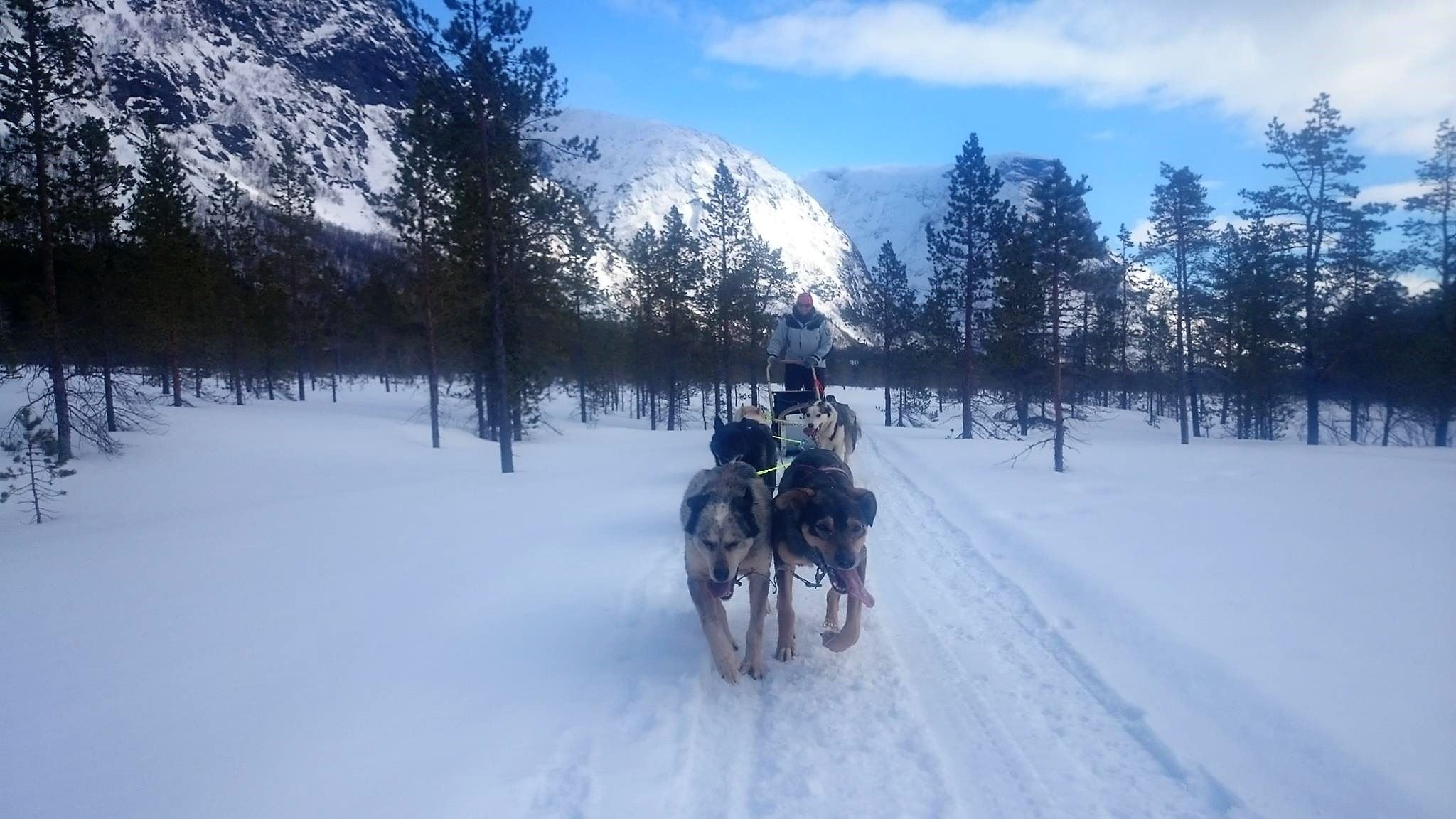 Dog sledding in Røyeldalen / Reisadalen