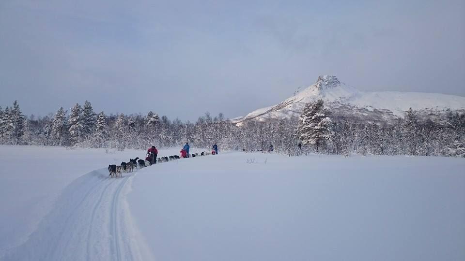 Dogsledding in Røyeldalen / Reisadalen