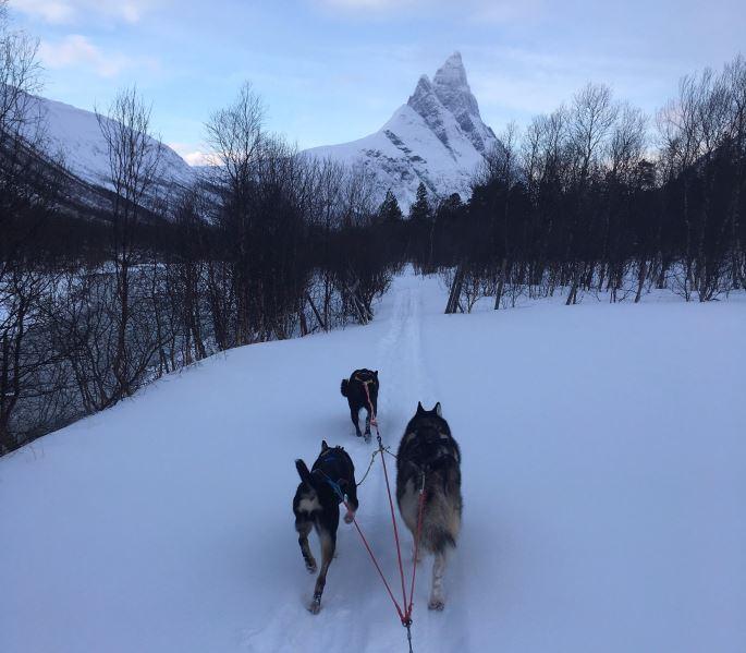 Hundesledetur i Signaldalen kveldstid - Bergbjørn Fjellservice