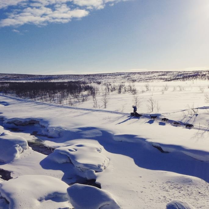 Dog sledding in Signaldalen evening - Bergbjørn Fjellservice