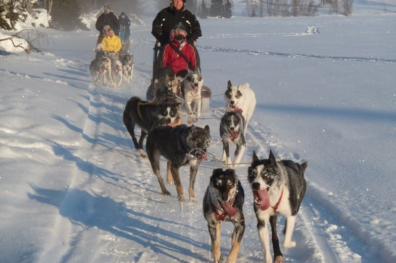 Dogsledding, start time: 11:30