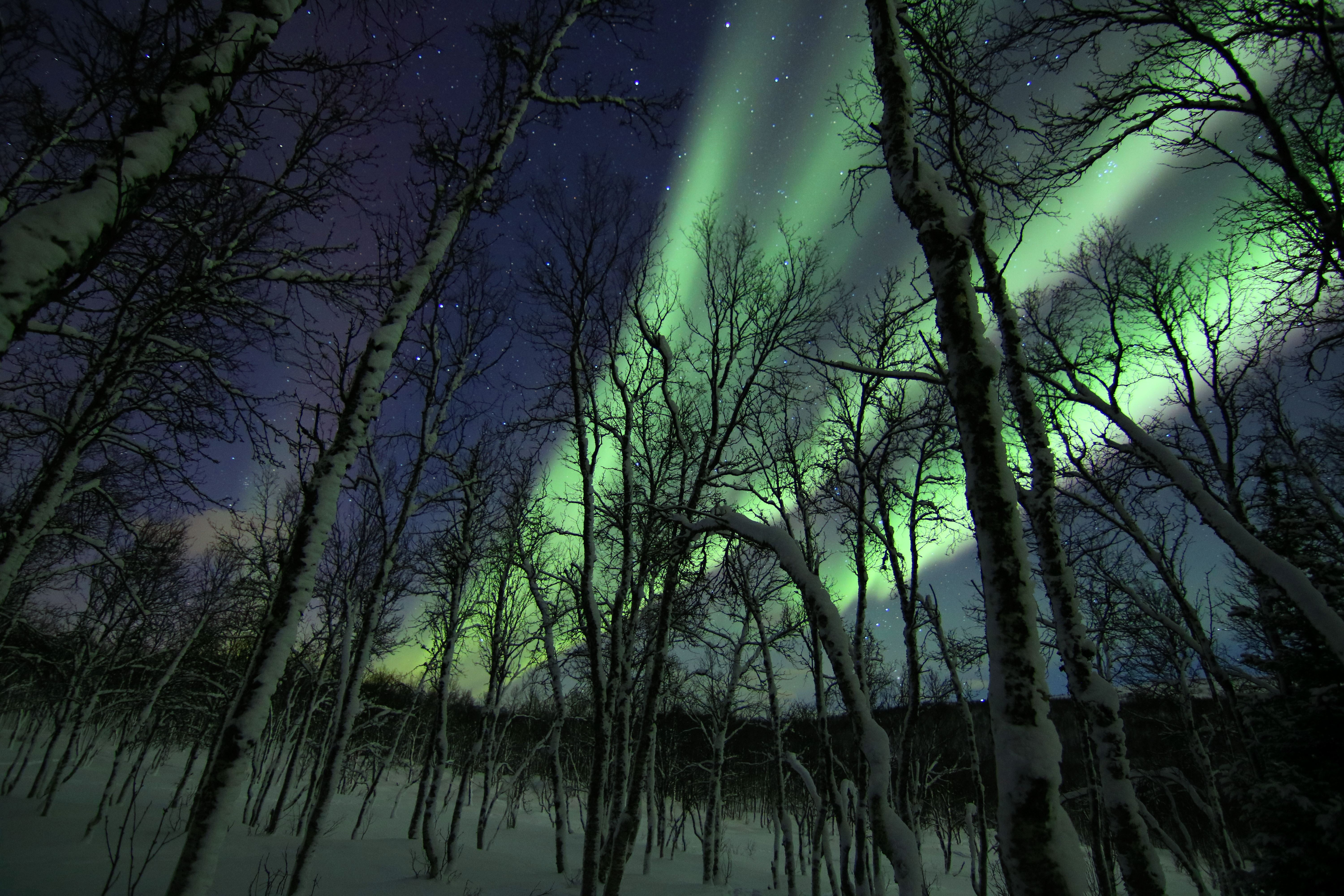 !SPECIAL OFFER! Northern Lights OVERNIGHT at Polar Cabin with Snowshoeing/Hiking -All included- (2-6 people) -Polar Cabin