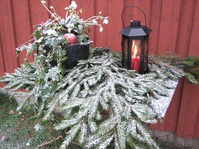 Foto Asmoarp , Julgransförsäljning och julstuga i Asmoarp