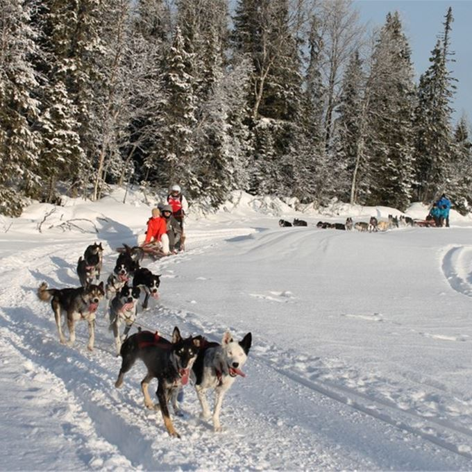 Dogsledding in Funäsdalen