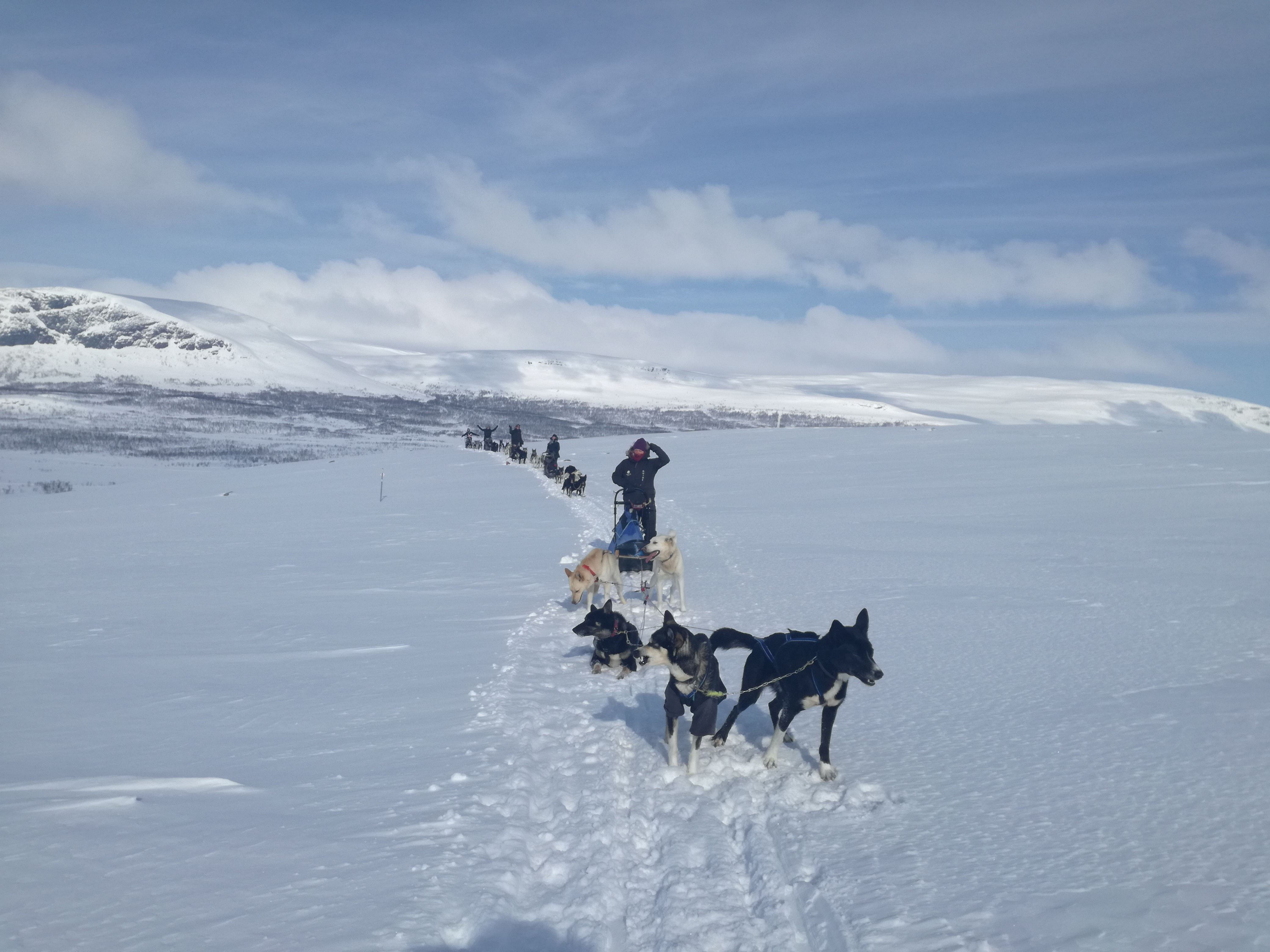 Dogsledding in Lyngen - Daytime - Lyngen Outdoor Experiences
