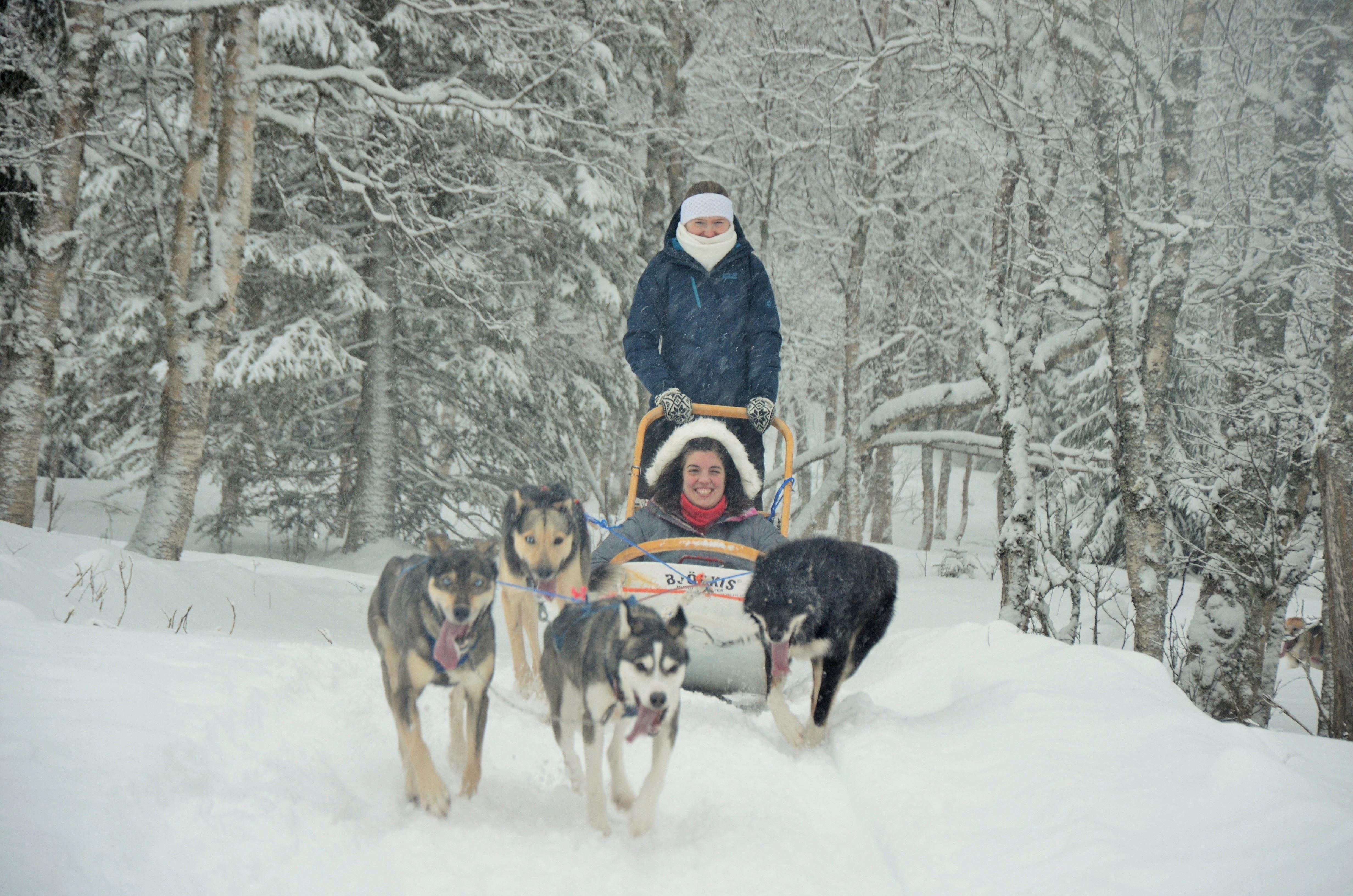 Half day - Dog sled tour