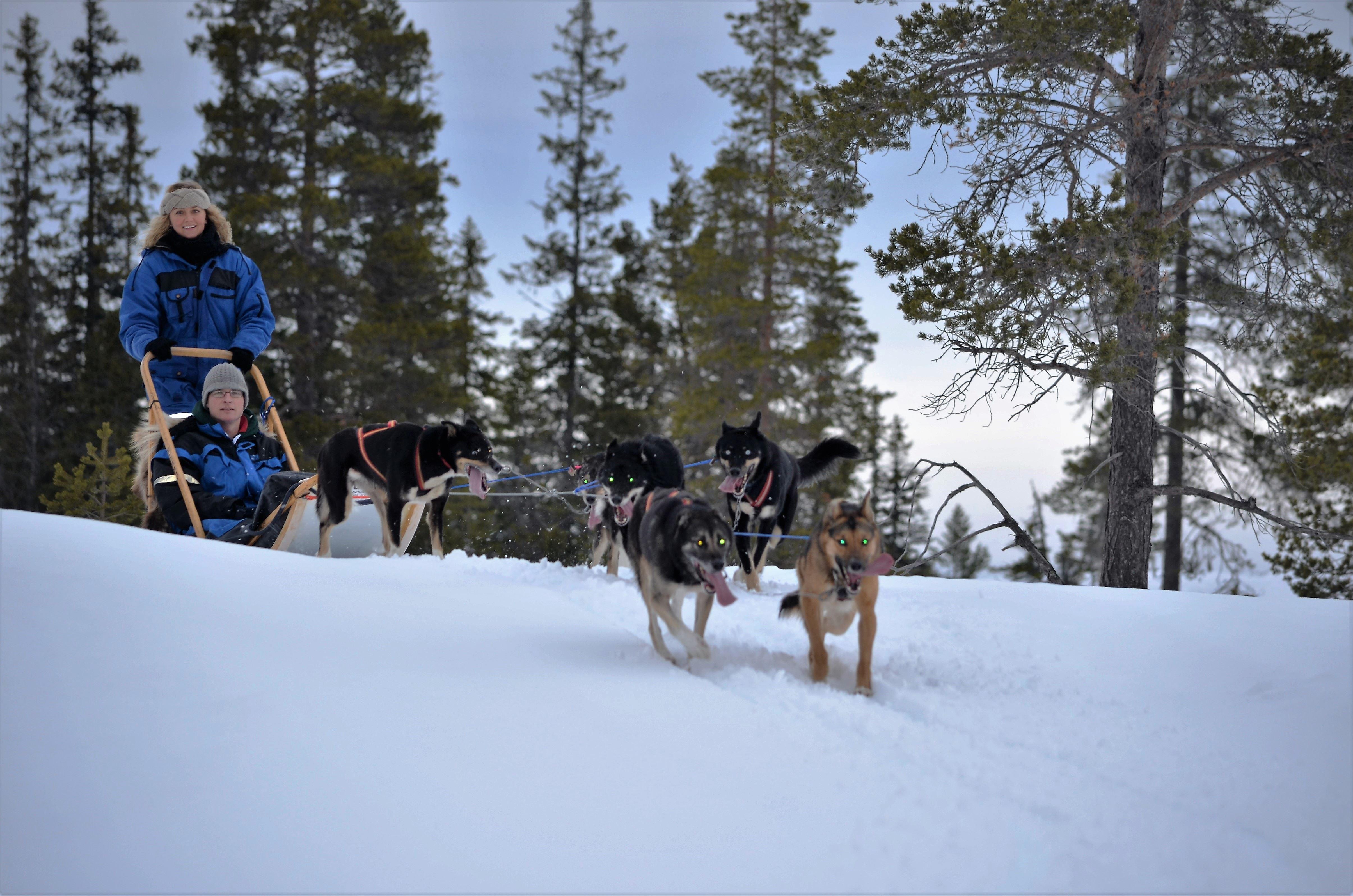 Day tour dogsledding