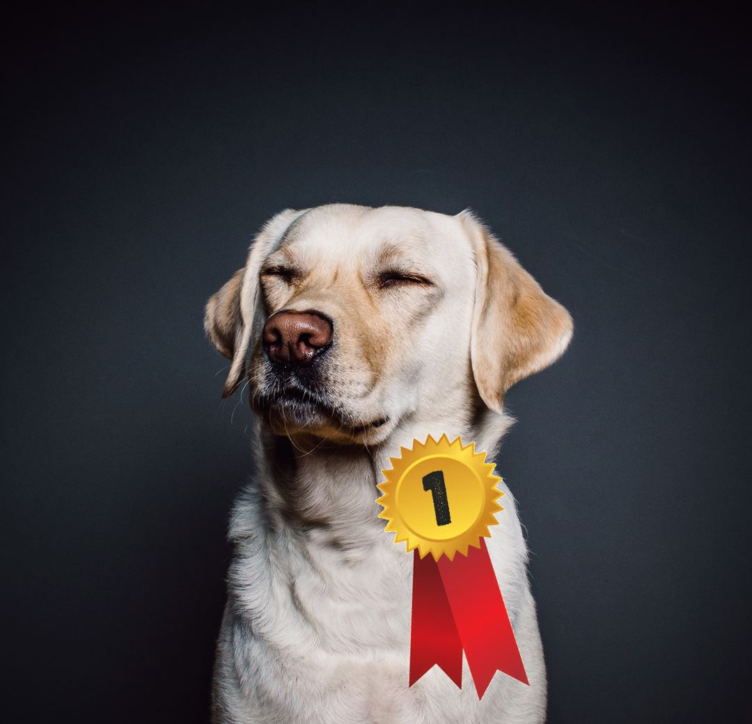 Hundutställning
