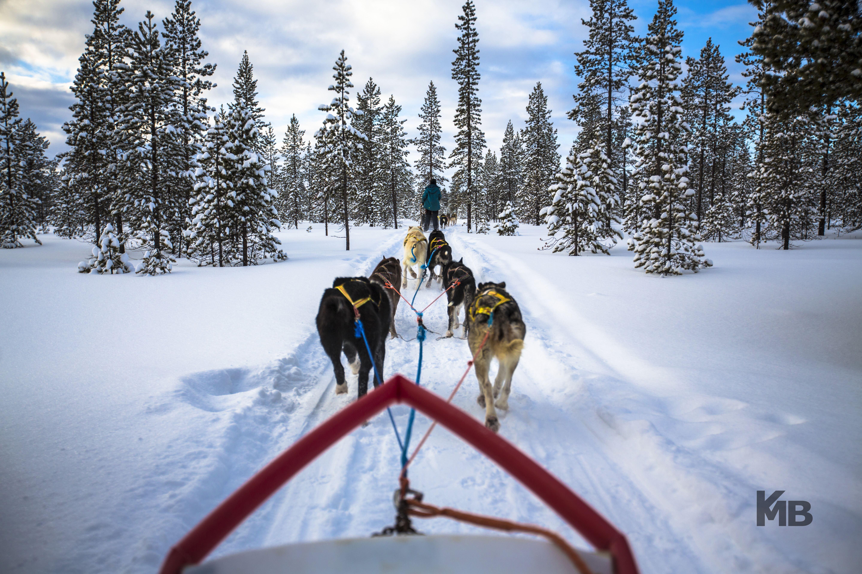 Husky adventures winter - BIRK