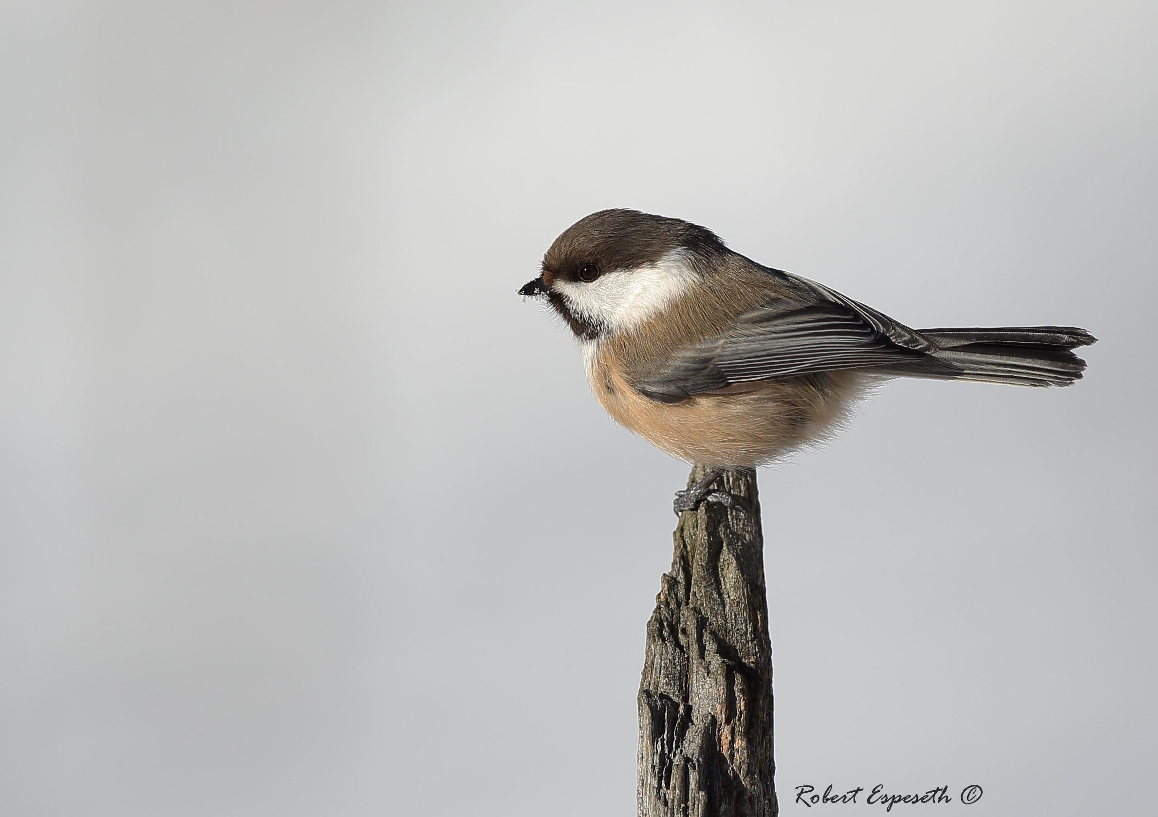 Photo tour for birdwatchers to Myrbekken