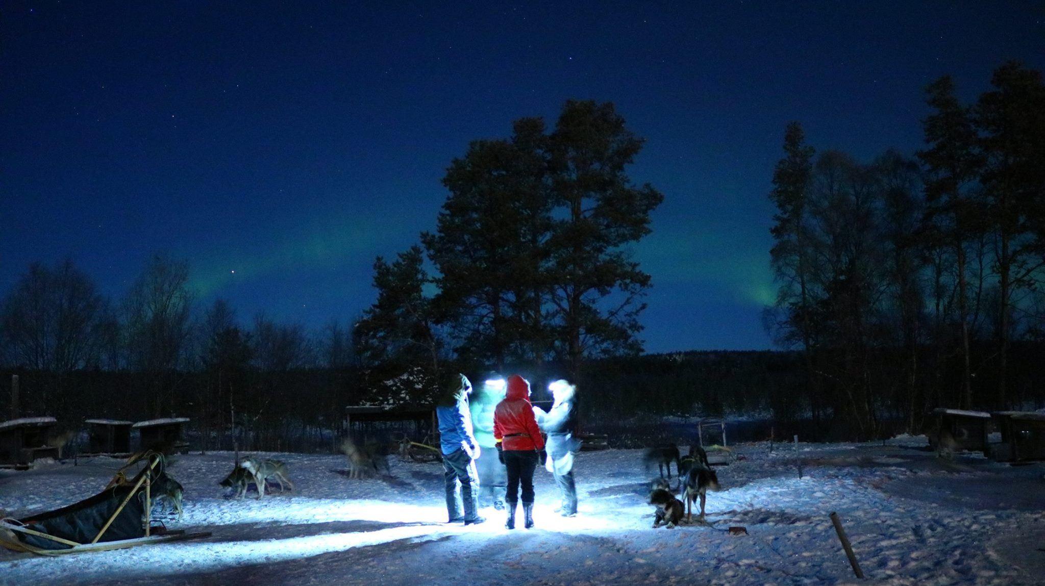 Northern light husky safari (Accommodation at BIRK is needed)