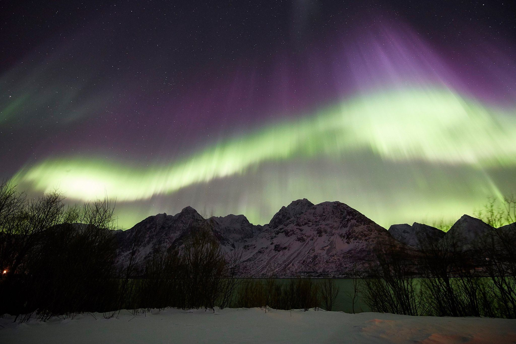 Aurora, whale and Hurtigruten - Green Gold of Norway