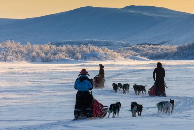 Experience dogsledding in Polar Park