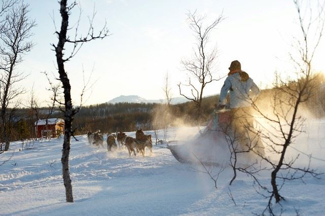 Experience dogsledding from Polar PArk