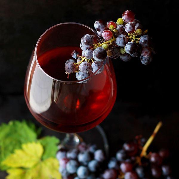 Burg med vinprovning