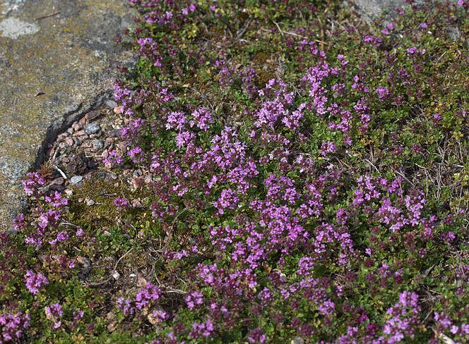 Flower hike