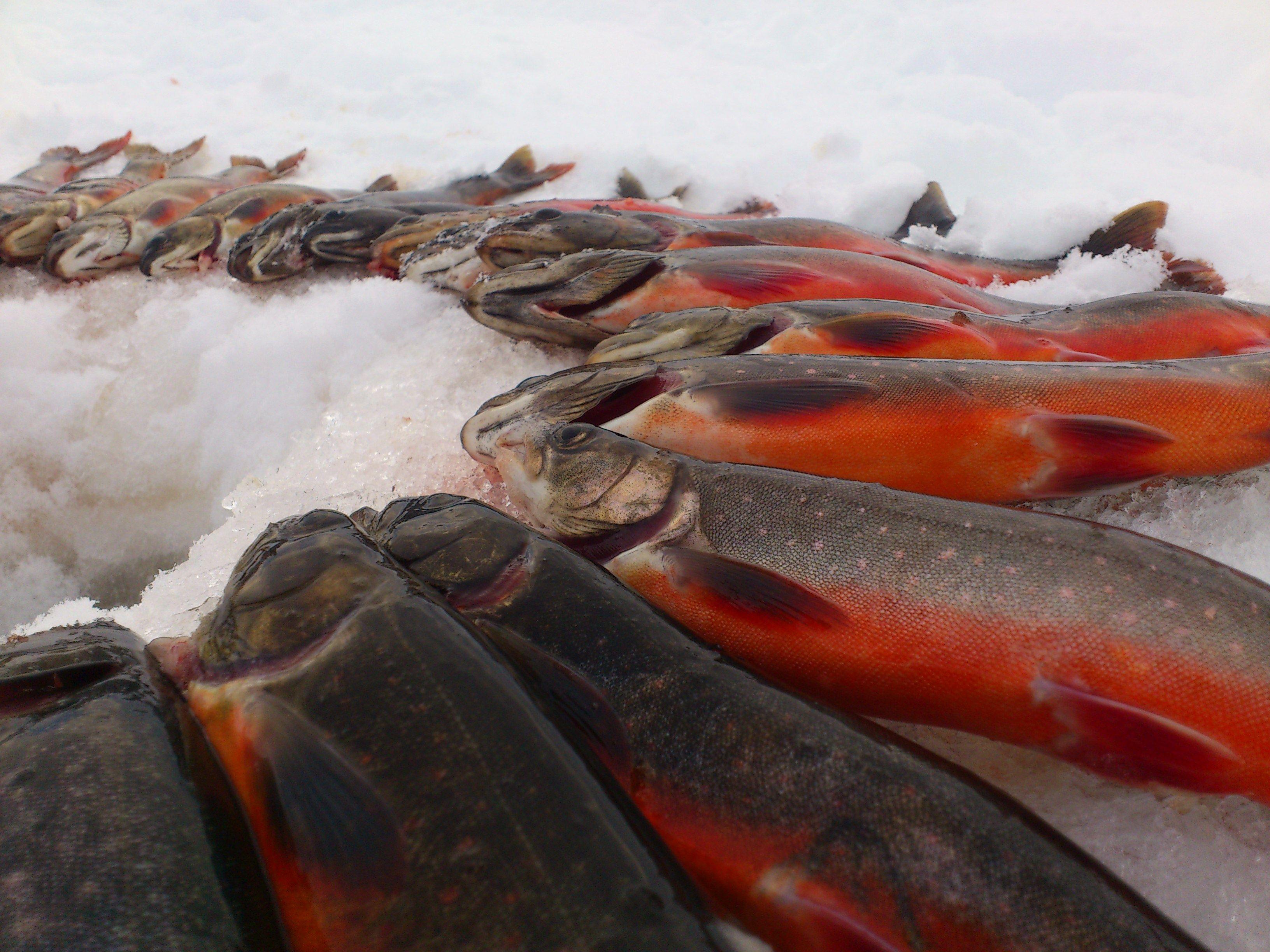 Plahte Eiendommer, Isfiske velfjord