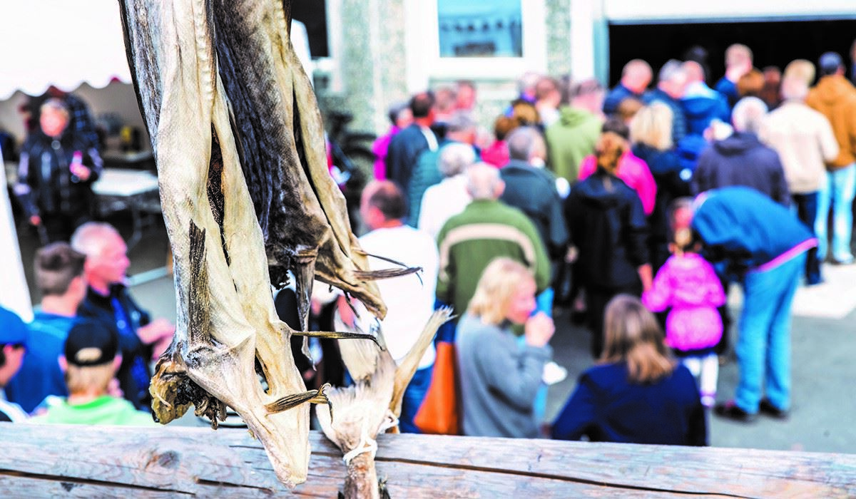 Querinifest på Røst